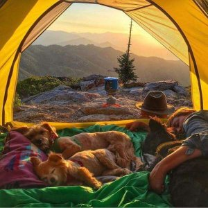 Large tent with dogs