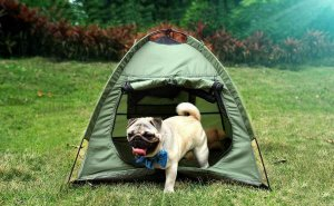Lumsing Pet Tent for Dogs