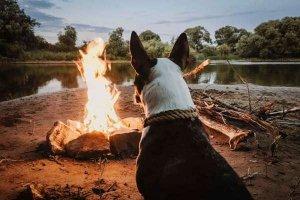 dog near campfire
