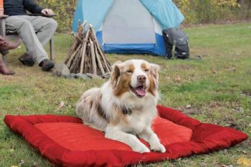 outdoor dog bed camping