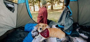 what is a tent for dog owners