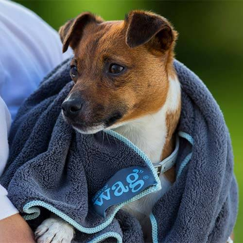 dog camping towel