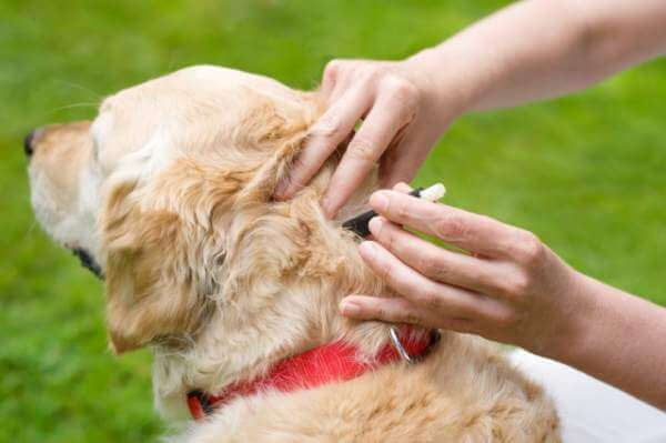 dog tick repellent