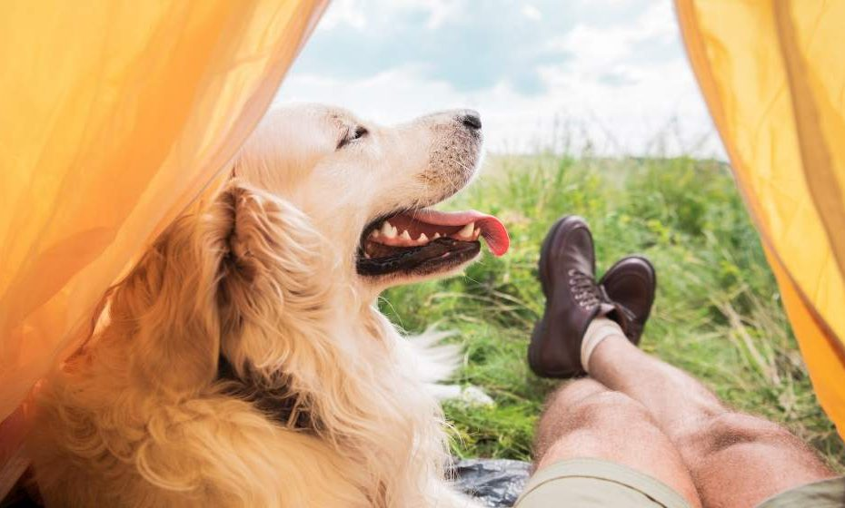 7 Practical Tents for Camping with Dogs